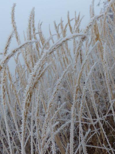 Nature Winter