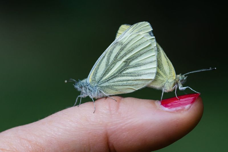 Close-up of hand holding small insect butterfly