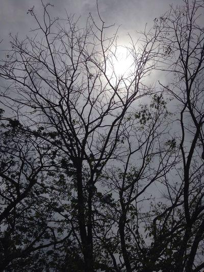 Bare Tree Beauty In Nature Scenics Branch Tree