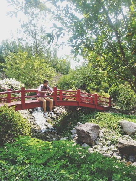 En jardin japones 🇯🇵 Japon Japan Japon 🗾 Jardin Japones