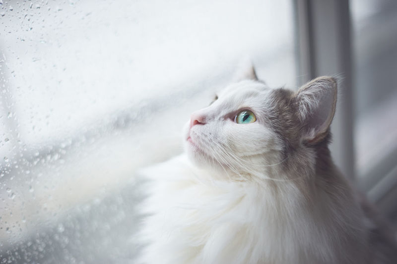 Close-up of cat looking out of window