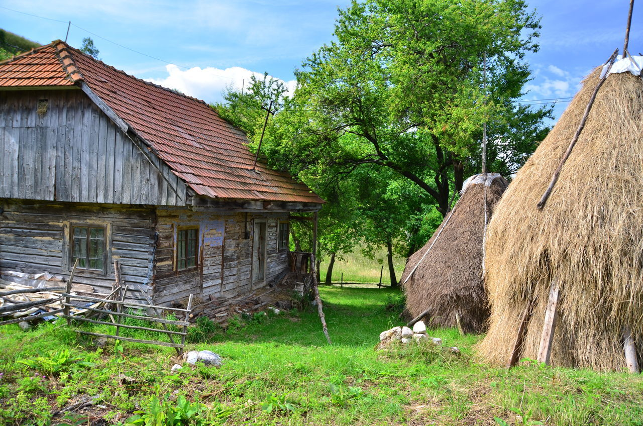 tree, architecture, built structure, day, house, nature, no people, grass, building exterior, field, outdoors, sky, growth, barn, rural scene, beauty in nature, mammal