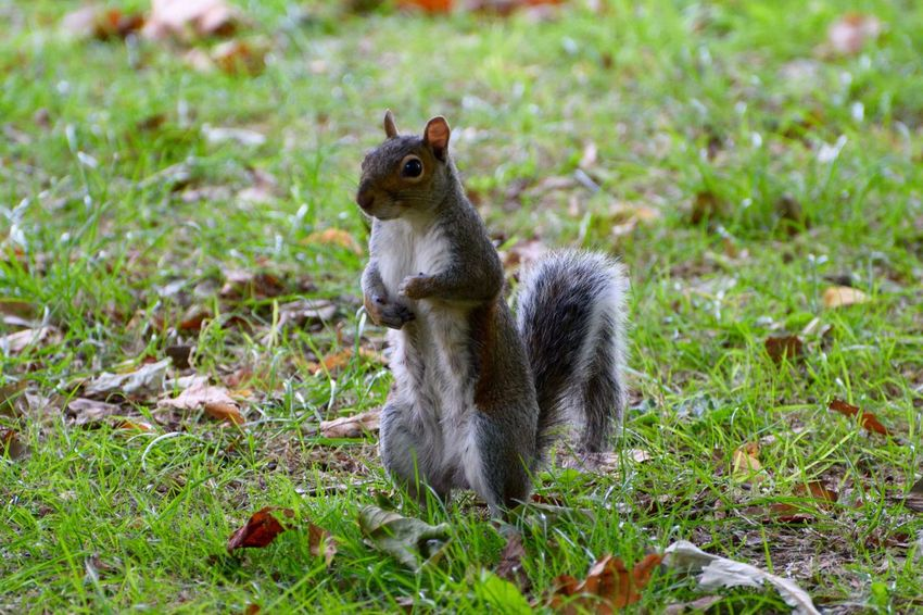 Hello :)) Check This Out Hello World Relaxing Hi! Taking Photos Cheese! Bestoftheday Eye4photography  LONDON❤ Enjoying The Sun Hugging A Tree Myperspective EyeEm Best Shots Squirrel Park Life Squirrels Animals In The Wild