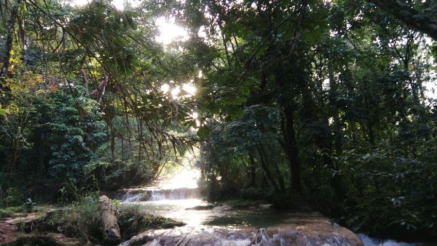 Cascadas de agua azul Chiapas, México Mimejorviaje FotoTomadaPorMi Hemosavista