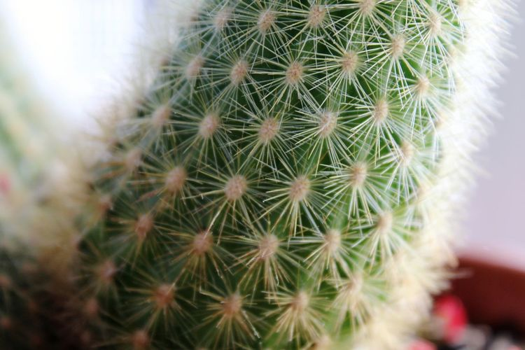 RISK Spiked Danger Uncultivated Needle - Plant Part Thorn Barrel Cactus Close-up Plant This Is Strength