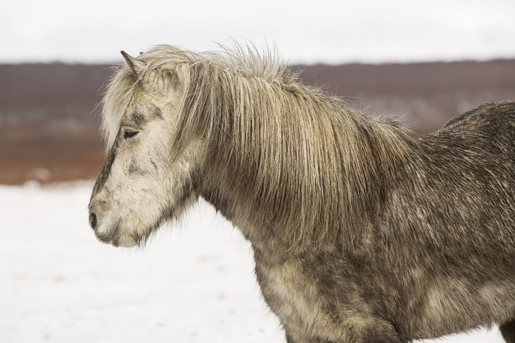 Close-up of horse against sky during winter