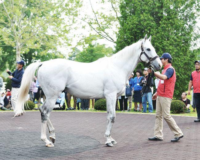 ゴールドシップ Beautiful White Horse Farmer Working Animal Donkey