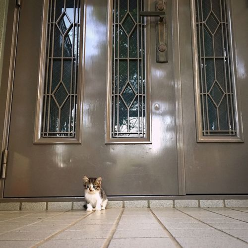 I just waiting for... Pets Cat Animal Door Sitting Waiting ... Minimalist Architecture Pet Portraits Pet Portraits