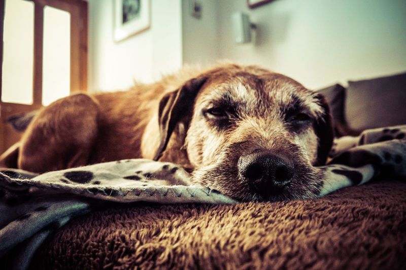 Comfortable Dog Domestic Animals One Animal Pets Relaxing