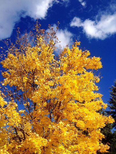 Vibrance Autumn