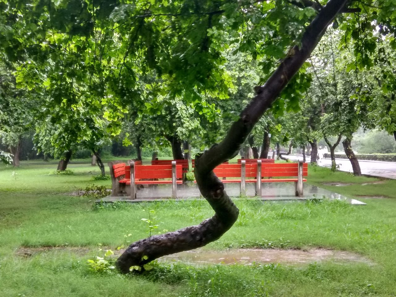 tree, grass, nature, green color, park - man made space, beauty in nature, growth, no people, day, tranquility, outdoors, grassland, water, branch