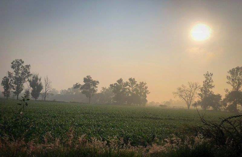 Fog in the field Foggy Landscape Plant Sky Beauty In Nature Growth Field Land Nature Tranquility Tranquil Scene Sun Scenics - Nature Tree Agriculture Rural Scene Idyllic Sunlight Sunset Landscape No People Environment
