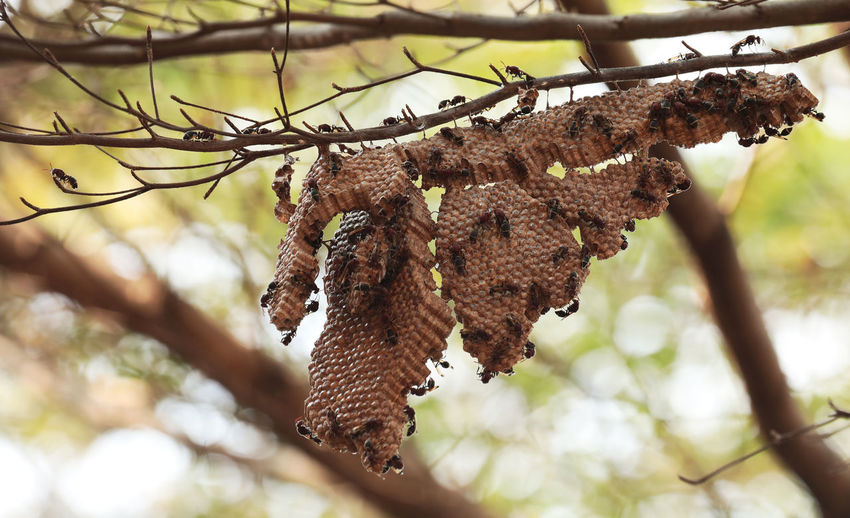 Low angle view of dry leaves hanging on tree