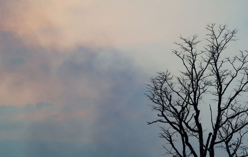 Low angle view of silhouette tree against sky at sunset