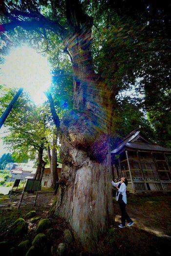 御神木。Sacred tree. Praying Sacred Tree Sacred Places Sacred Shrine Shinto Shrine WoodLand Shinto Tree Plant Full Length Real People One Person Leisure Activity Standing Nature Lifestyles Growth Day Beauty In Nature Outdoors