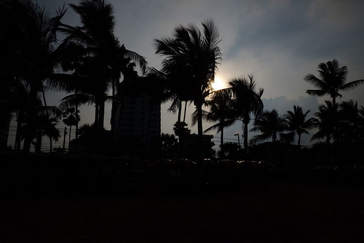 Low angle view of silhouette palm trees against sky during sunset