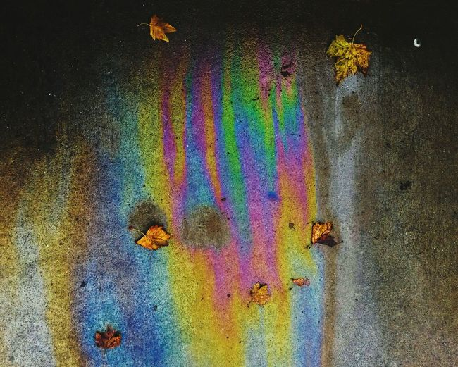 Close-up of multi colored wall in monsoon