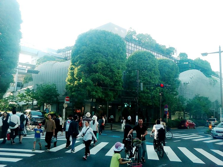 City Street Tree Street Day People Real People City Large Group Of People City Life Japan Japan Photography Green Building Crossing The Street Crossing FutakotamagawaWalking Futakotamagawa, Setagaya-ku Road Transportation Cycling Pedestrian Stoplight Outdoors Adult