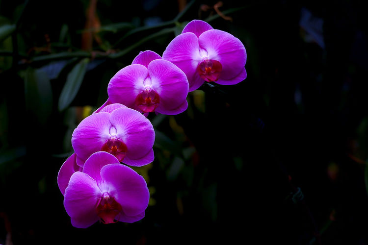 Four orchids in