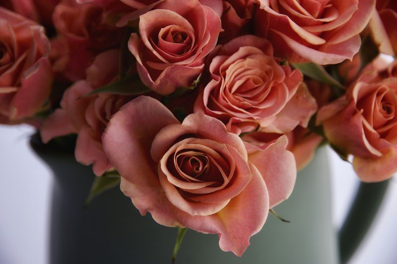 Roses Flower Flowering Plant Beauty In Nature Plant Vulnerability  Rosé Fragility Close-up Freshness Rose - Flower Flower Head Petal Nature Pink Color No People Growth Indoors  Bouquet