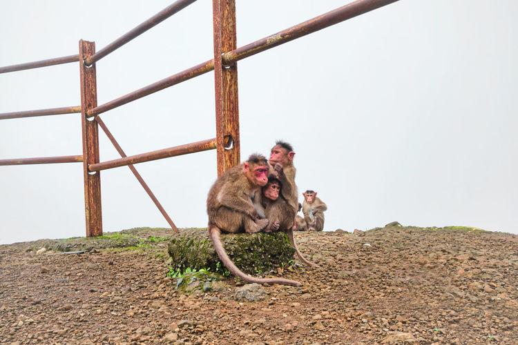 A monkey family