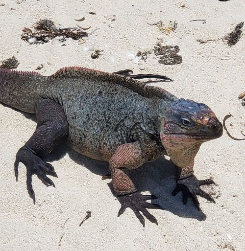 High angle view of lizard on sand