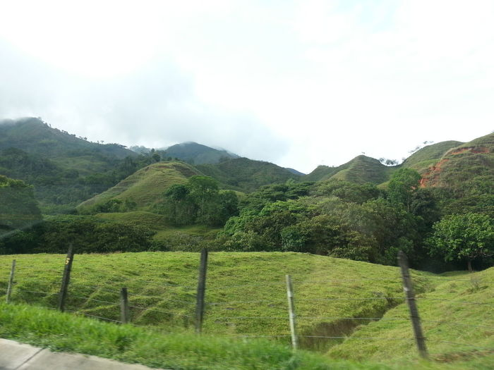 Colombia Es Bella Things That Are Green Taking Photos