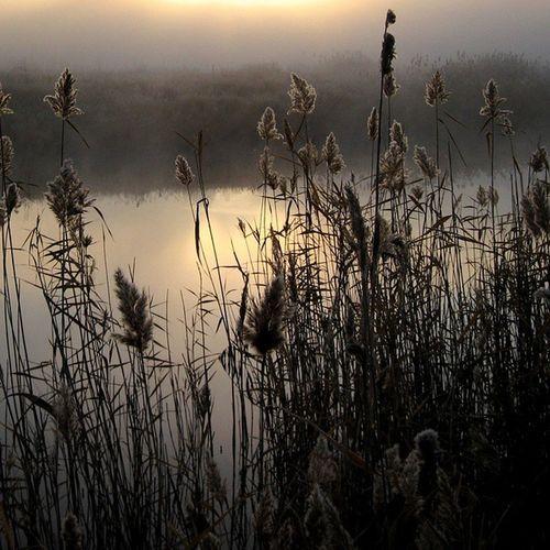 омск сибирь паркпобеды туман утро озеро осень кэнон безфильтров Omsk Siberia Autumn Lake Fog Nofilter Canon Morning
