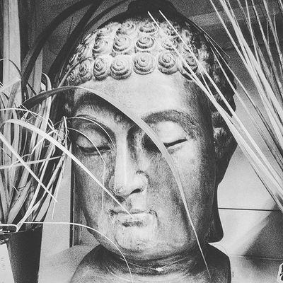 Mais ou suis-je ? Bouddha  Peace Closeyoureyes Openyourmind etc mangedelherbe proprelescontours