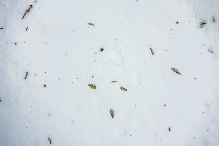 Animal Themes Close-up Day Mammal Nature No People Outdoors Seed Seeds In Winter Sky Tree Seed