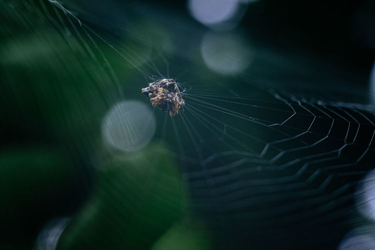 Spider on the web with green background.
