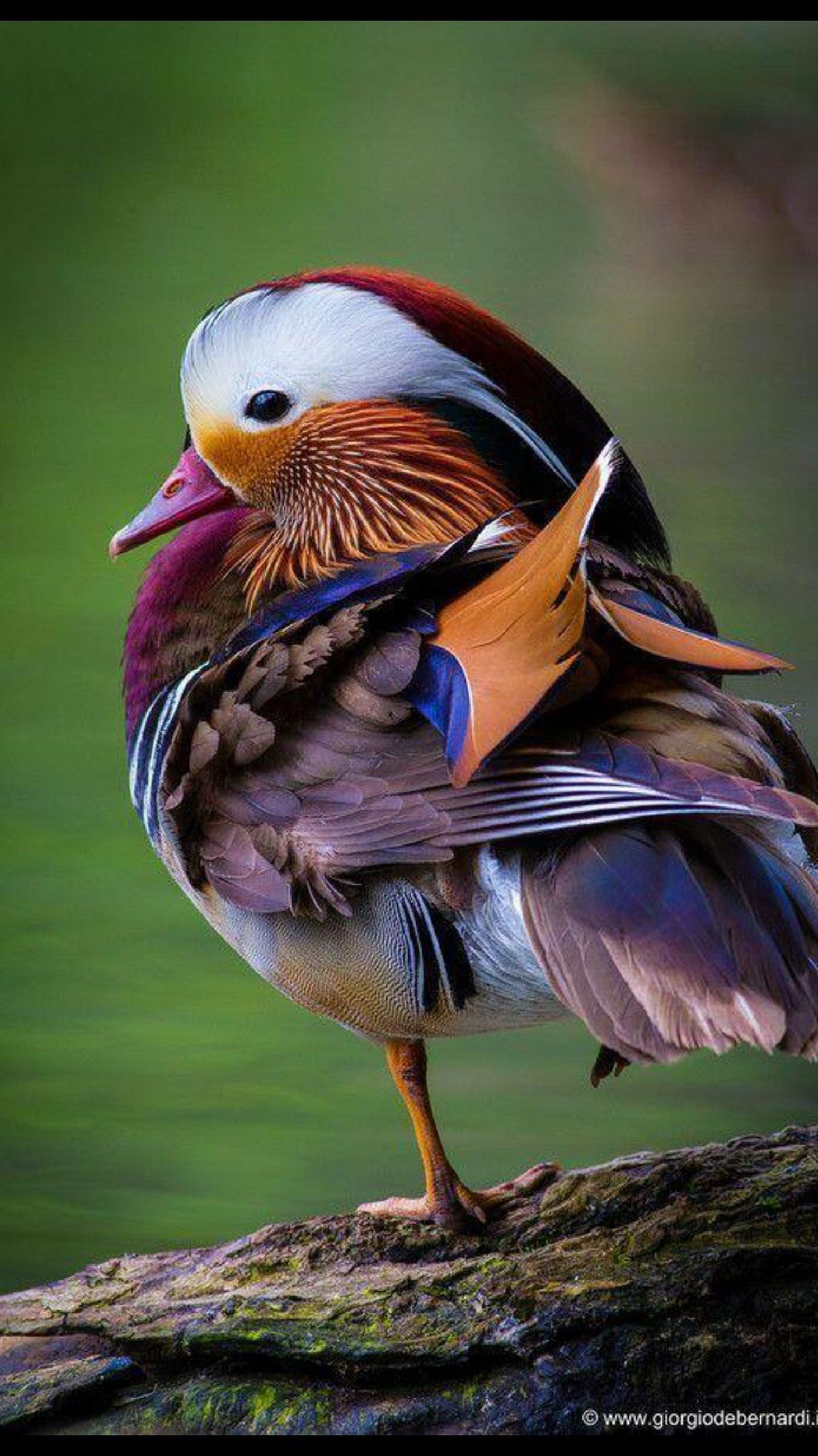 animal themes, one animal, animals in the wild, bird, wildlife, focus on foreground, close-up, side view, nature, full length, wood - material, outdoors, perching, animal head, beak, day, grass, no people, beauty in nature, auto post production filter