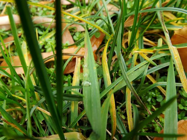 Grasses Are Beautiful Too Green Nature Abugslife Nature Is Art Enhanced