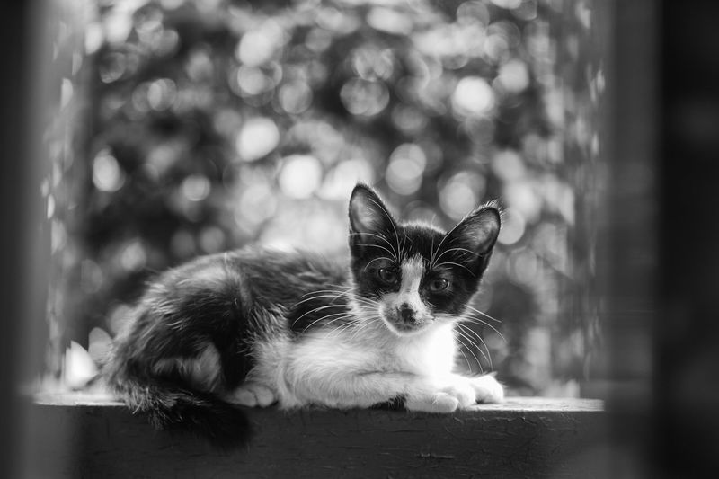 Streetphotography Blackandwhite Monochrome Streetphoto_bw Popular Photos Light And Shadow Cat Black And White Streetphoto Pets