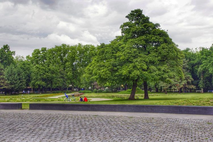 Tree Green Color City Nature The Great Outdoors - 2016 EyeEm Awards EyeEm Green Color Green Gardening Garden Photography Hdr_Collection HDR Collection