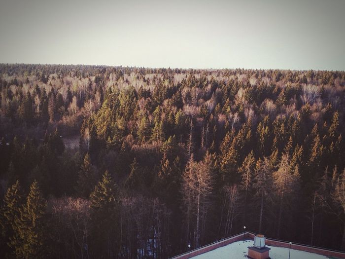 Forest At Home Whatuwillseefromuwindow