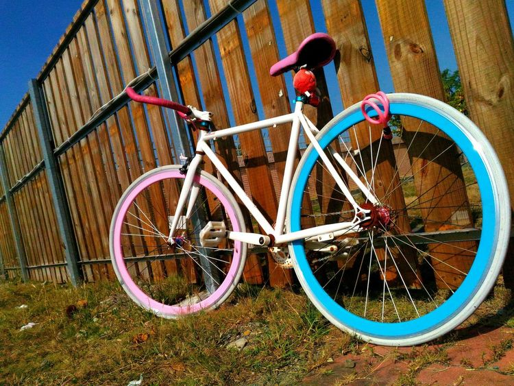 My dormate's Girly bike Bicycle Outdoor Photography Check This Out Hello World Followme My Masterpiece Colorful Anythingdope Photo Of The Day Bikesaroundtheworld Photography Beautiful Checkthisout Taking Photos Enjoying Life Anythinggoes Hi! Cute Photooftheday Artistic Photo Colors Rides Wheels Sports & Bike Follow Me :)