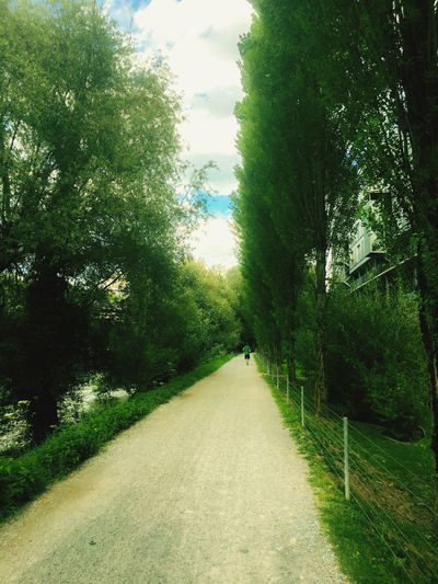 Summer Jogging at the river River,zurich Tree The Way Forward Nature Limmat Green Grass Green Color Day Walking Growth Beauty In Nature Tranquility Real People Tranquil Scene Landscape Scenics Outdoors One Person Plant Sky Full Length Fluss First Eyeem Photo