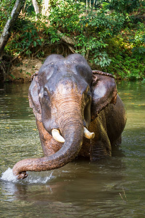 Young elephant swimming in tropical pond Animal Animal Head  Animal Themes Animal Wildlife Animals In Captivity Animals In The Wild Day Elephant Green Color Jungle Lake Mammal Nature One Animal Outdoors Pond Rainforest River Swimming Thailand Topical Water Wet Wildlife Zoology