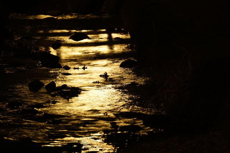 ただの… 小川 From My Point Of View Light And Shadow Nightphotography Nature_collection Water Reflections River 今日は味噌ラーメン美味しかったよ😊