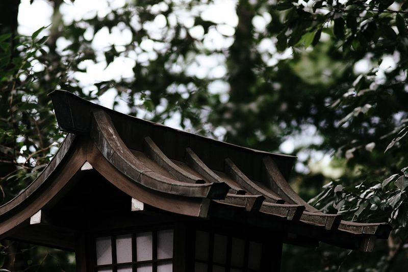 Lantern Lanterns Japanese Style Roof Shinto Shrine Shrine Tree Roadside Green No People Meiji-Jingu Tokyo Japan Tokyo,Japan Travel Walking Around Forest Shirine Japan Photography Historic Sanctuary