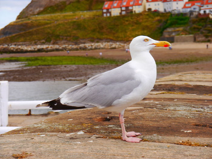 Animal Animal Themes Animal Wildlife Animals In The Wild Bird Close-up Day Focus On Foreground Full Length Looking Nature No People One Animal Outdoors Perching Retaining Wall Seagull Vertebrate Water White Color