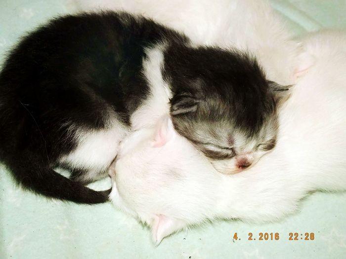 Animal Themes Pets Relaxation Close-up Indoors  Baby Animals Kittens Sleeping Cuddling Kitties!