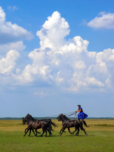Horse show in the hungarian puszta Animals Clouds And Sky Debrecen Farm Field Grass Horse Horse Riding Horse Show Horses Hortobagy Hungary Landscape Meadow Nature Nature Outdoor Outdoors Person Puszta Ride Show Sky