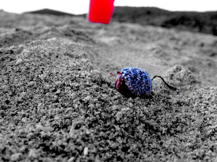 -(0)\ C Γ Λ Ψ L Λ Ψ Λ Υ /(0)- Colorsplash Nature Streetphotography Sand Colors Nature_collection Hermit Crab Beach