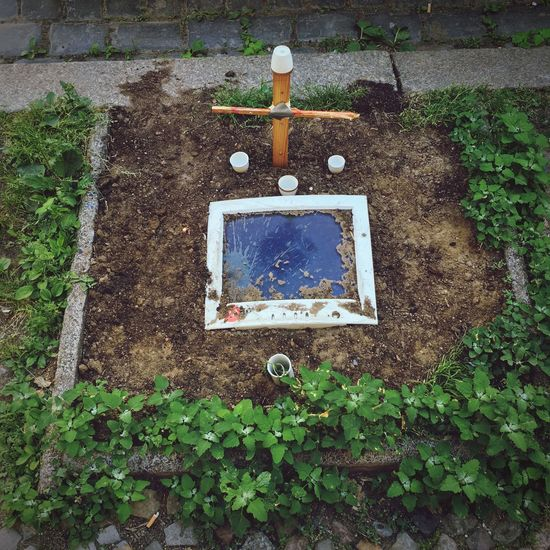 R.i.P. Frame Ivy Street Burried Technology Burried Treasure Cross Grave Symbolic  Outdoor Screen Screen Plant Leaf Day Plant Part Nature Growth High Angle View No People Outdoors