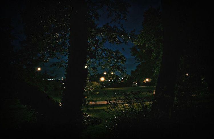 Narrows botanical garden at night. In Brooklyn