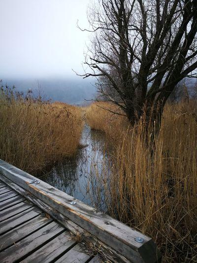 Water Railroad Track Tree Sky