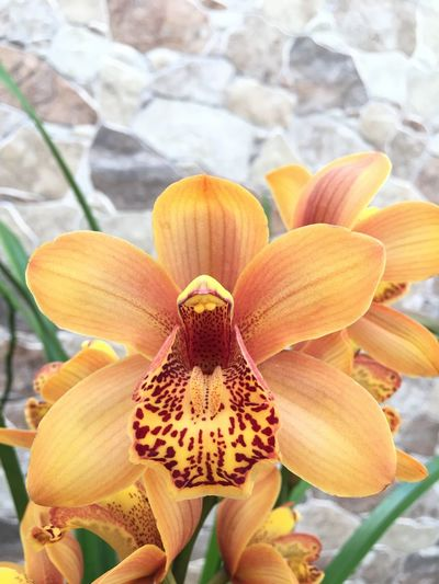 Cymbidium Flower