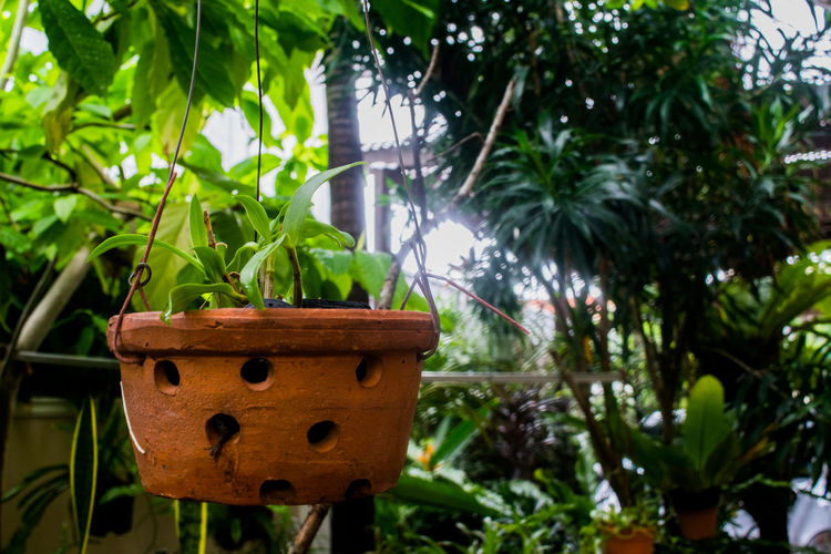 Beauty In Nature Close-up Day EyeEm Nature Lover Focus On Foreground Garden Nature Outdoors Plant Pot Selective Focus